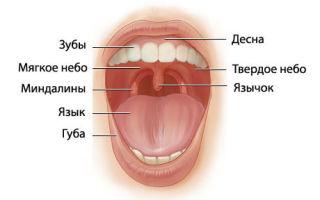 Гиперплазия миндалин: причины патологии и способы ее лечения