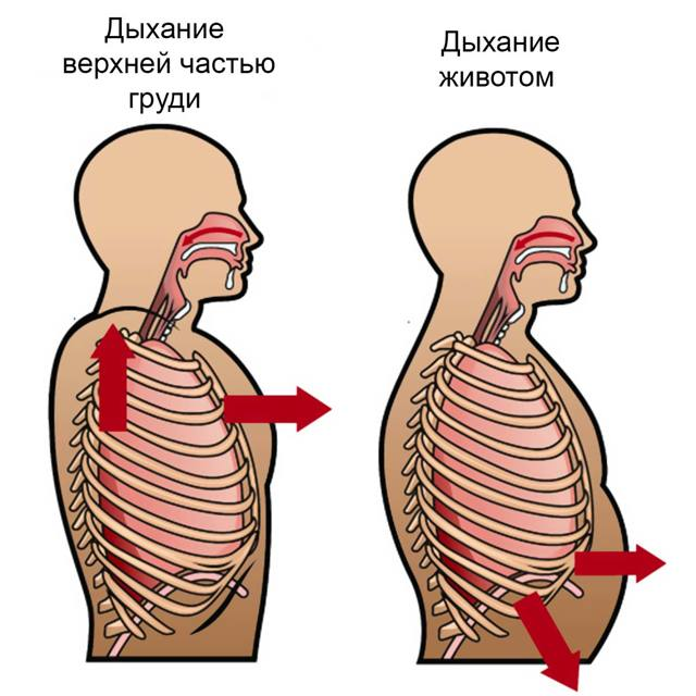Правильное дыхание диафрагмой: что важно знать?