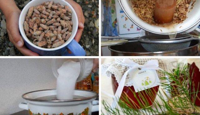 Сосновые почки от кашля для детей и взрослых: рецепты