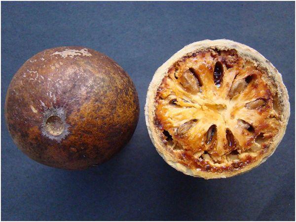 Матум: фруктовое дерево от кашля при бронхите