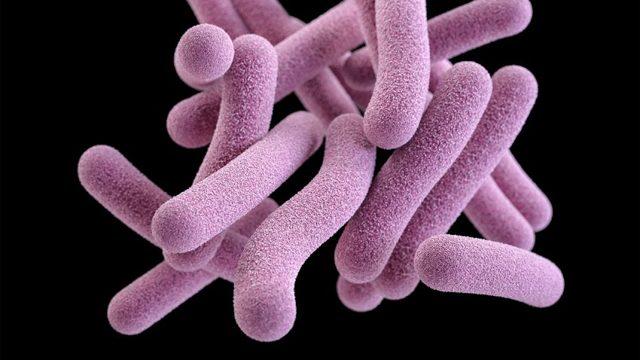 Как правильно принимать сало в лечении туберкулеза?