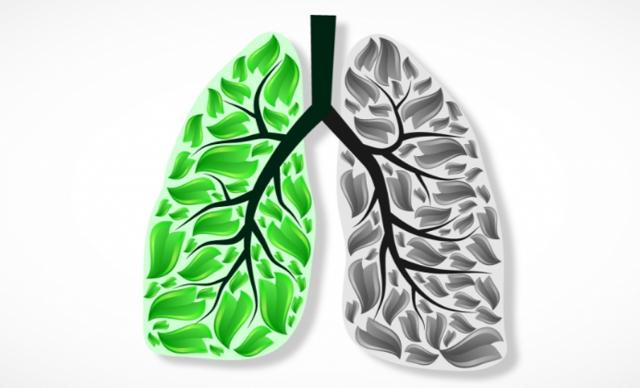 Первичная и вторичная профилактика рака легких