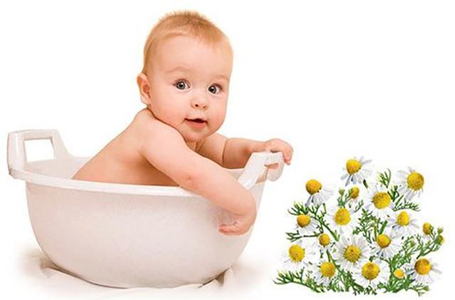 Помогает ли ромашка при кашле у взрослых и детей?