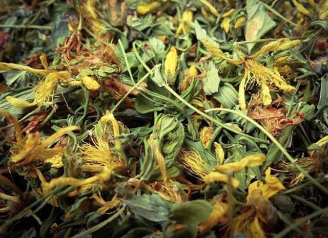Чай из зверобоя: особенности приготовления средства