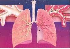 Ученые обнаружили механизм возникновения астмы