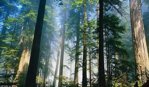 Лучший климат для лечения и отдыха больных бронхиальной астмой