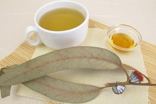 Эвкалипт от кашля - народные рецепты и медикаментозное лечение