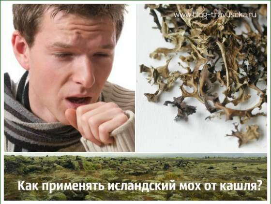 Как заваривать исландский мох от кашля: инструкция