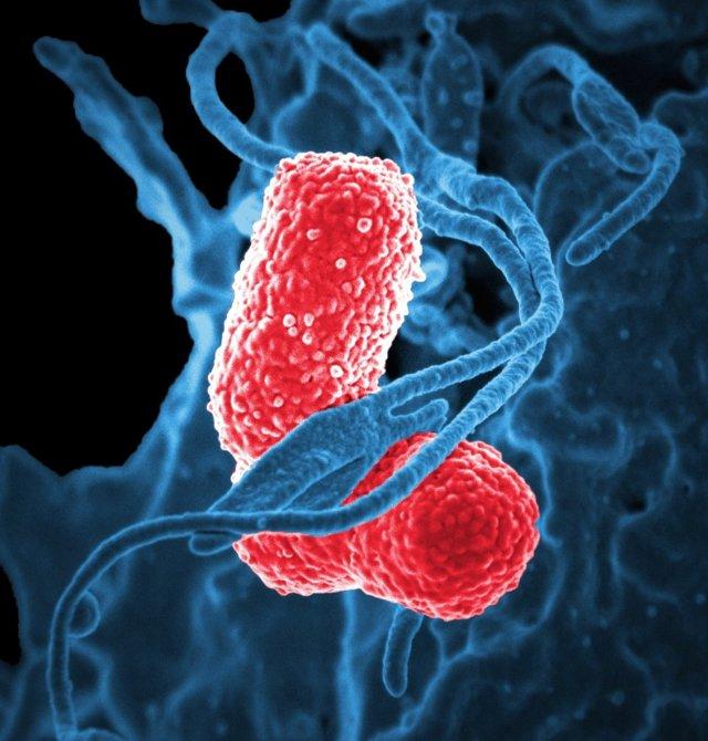 Гомеопатические средства от кашля: препараты и их применение